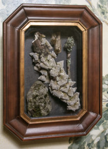 Authentic specimens, moss, fungi, lichen, nature, collection